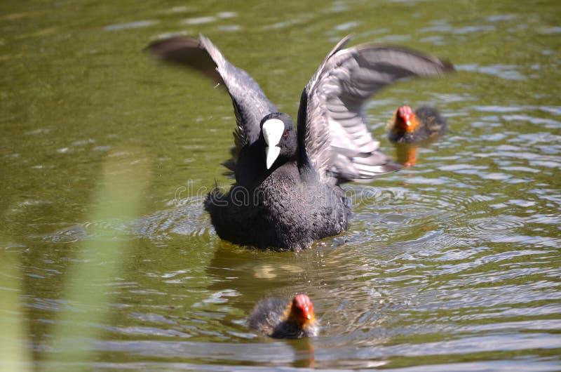 Onder Mijn Vleugels stock foto's
