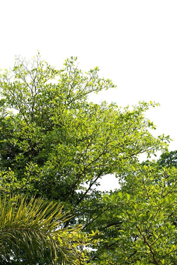 Onder van de Boom groene verse blad of struik grote grootte in de de Abstracte textuur en achtergrond van de vormvorm royalty-vrije stock foto's