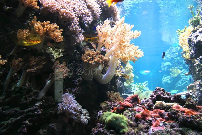 Onder water royalty-vrije stock afbeeldingen