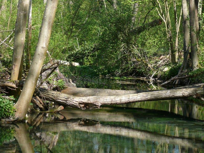 Onder water gezet gebied van een bos stock fotografie