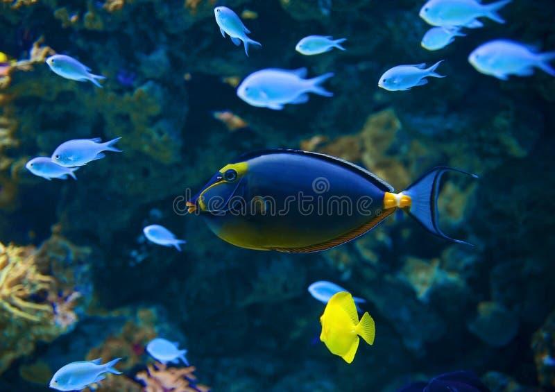 Onder waterwereld stock afbeelding