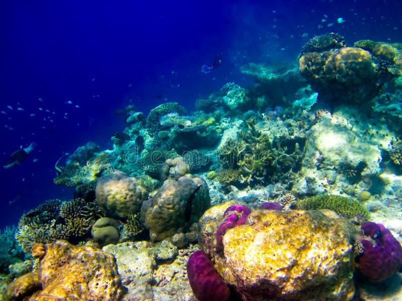 Onder waterwereld in de Maldiven royalty-vrije stock foto