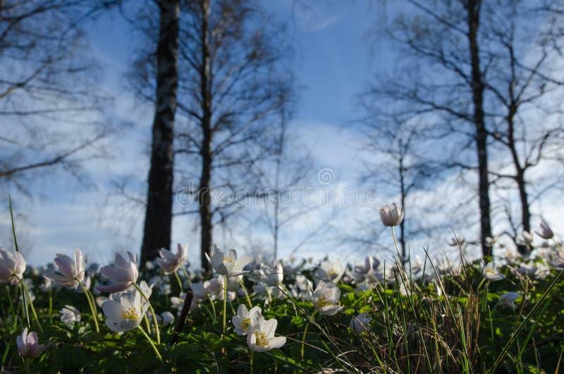 Onder windflowers royalty-vrije stock afbeeldingen