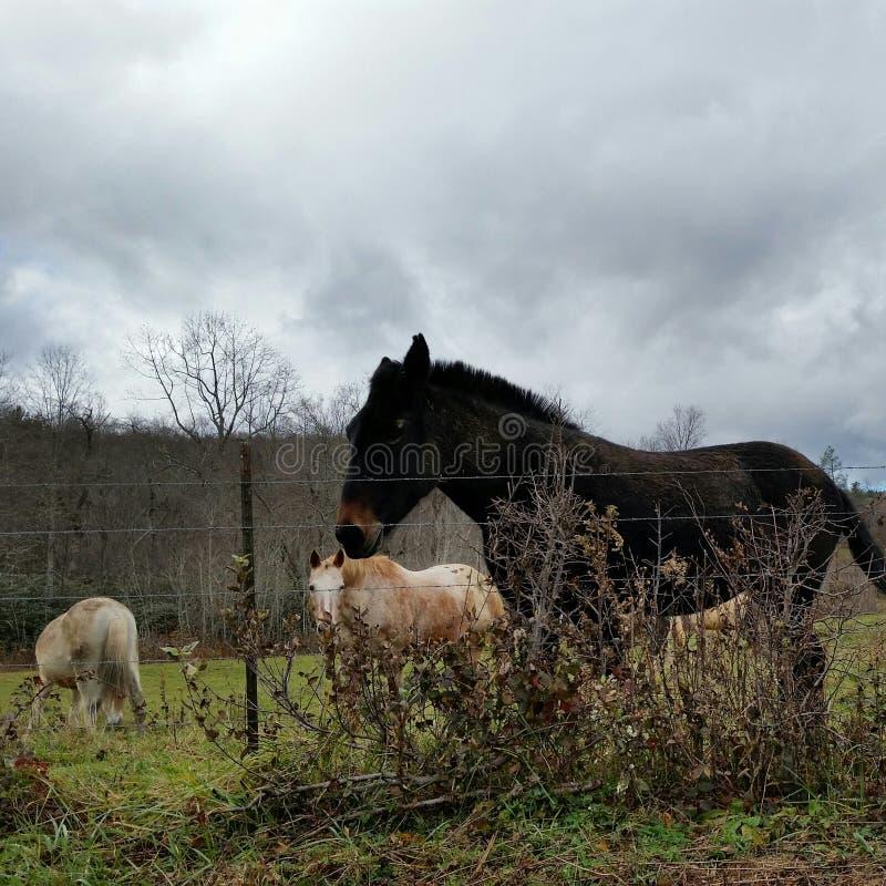 Onderaan in het landbouwbedrijf royalty-vrije stock fotografie