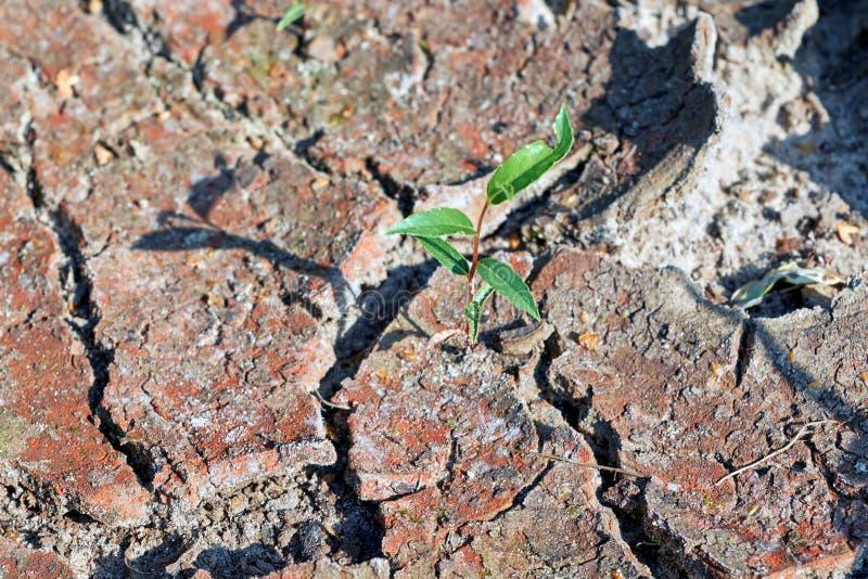 Onderbrekingen van een groeit de enige installatiespruit door en door de droge grond stock afbeelding