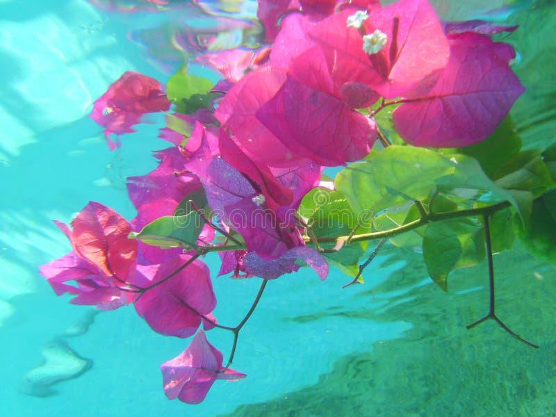 Ondergedompelde bloemen royalty-vrije stock fotografie