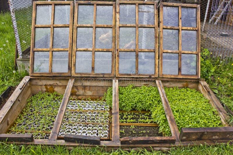 Ondergronds groen huis royalty-vrije stock foto
