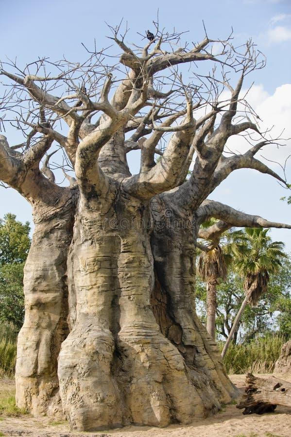 Ondersteboven of de boom van de Baobab stock afbeeldingen