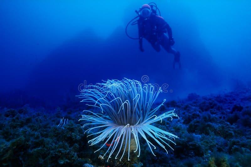 Onderwater royalty-vrije stock afbeeldingen