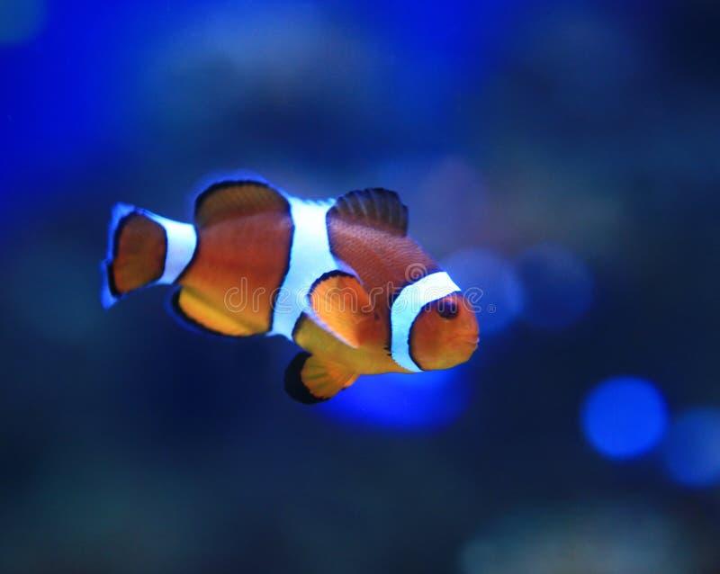 Onderwater Beeld van Mooi royalty-vrije stock afbeelding
