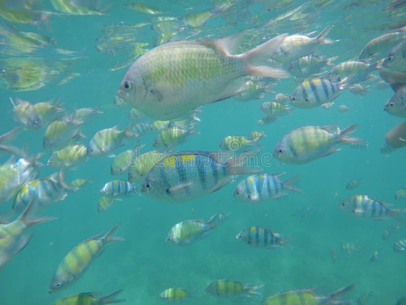 Onderwater de wereldervaring van Zuidoost-Azië royalty-vrije stock foto