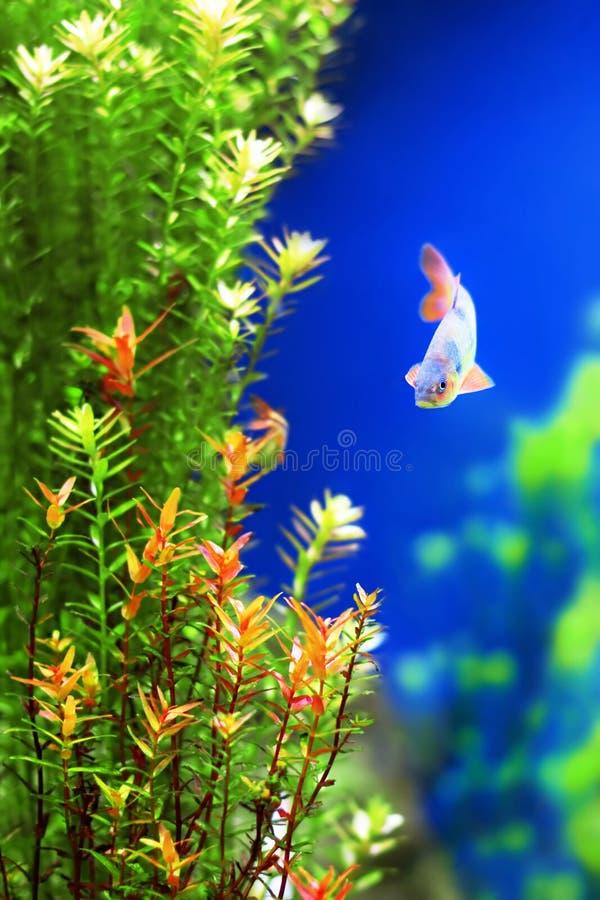 Onderwater installaties met een vis royalty-vrije stock afbeeldingen