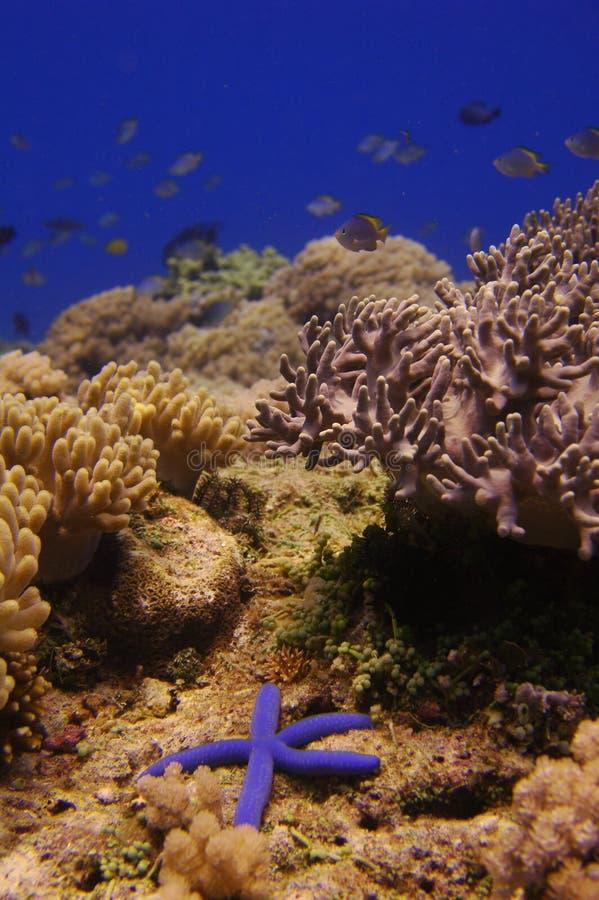 Onderwater landschap met zeester stock afbeeldingen