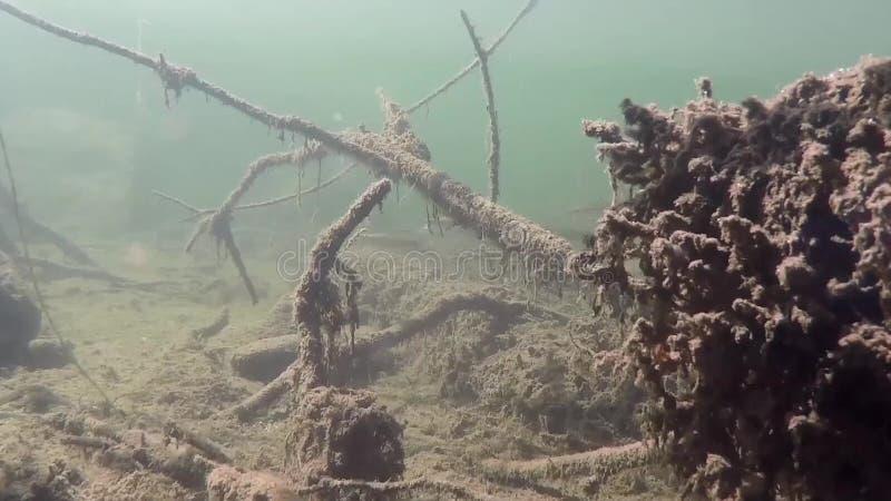 Onderwater levend met ondiepten van vissen stock videobeelden