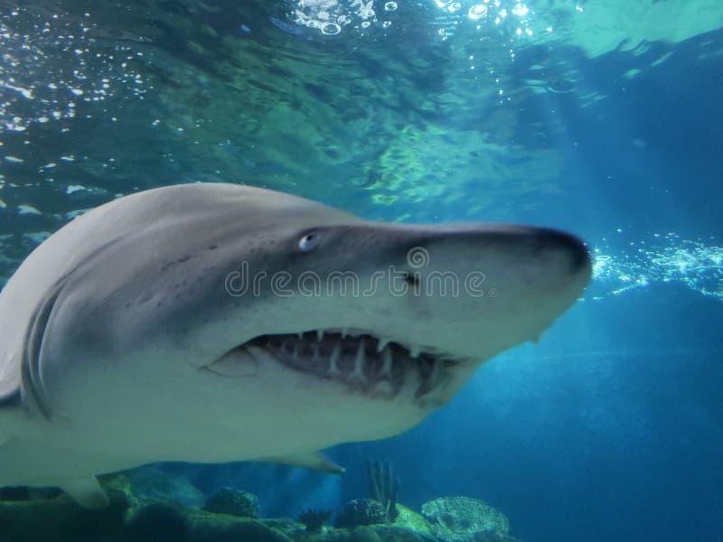 Onderwater omhoog dicht ontmoet met een haai royalty-vrije stock afbeelding