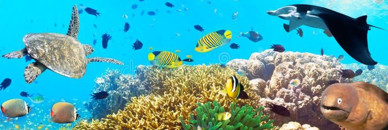 Onderwater panorama royalty-vrije stock fotografie