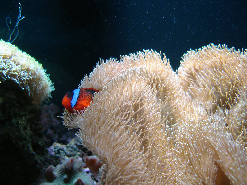 Onderwater reeks stock foto