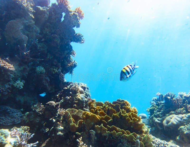 Onderwater scène Rode overzees, Israël royalty-vrije stock afbeelding