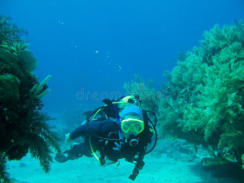 Onderwater scuba-duiker stock foto's