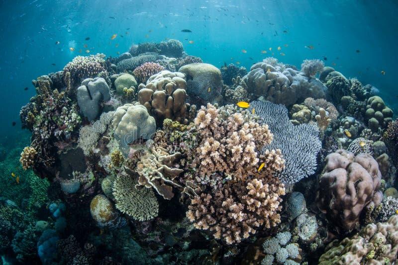 Onderwater Tropische Biodiversiteit stock foto's