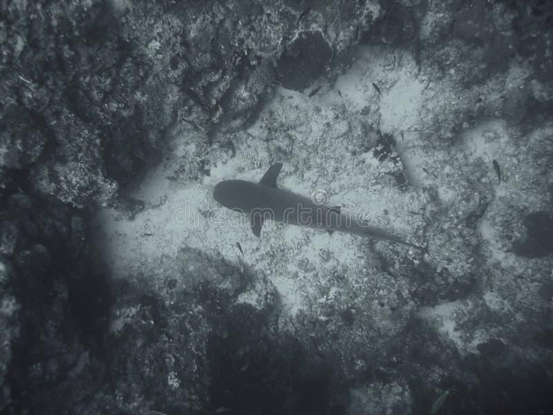Onderwater vissen stock fotografie