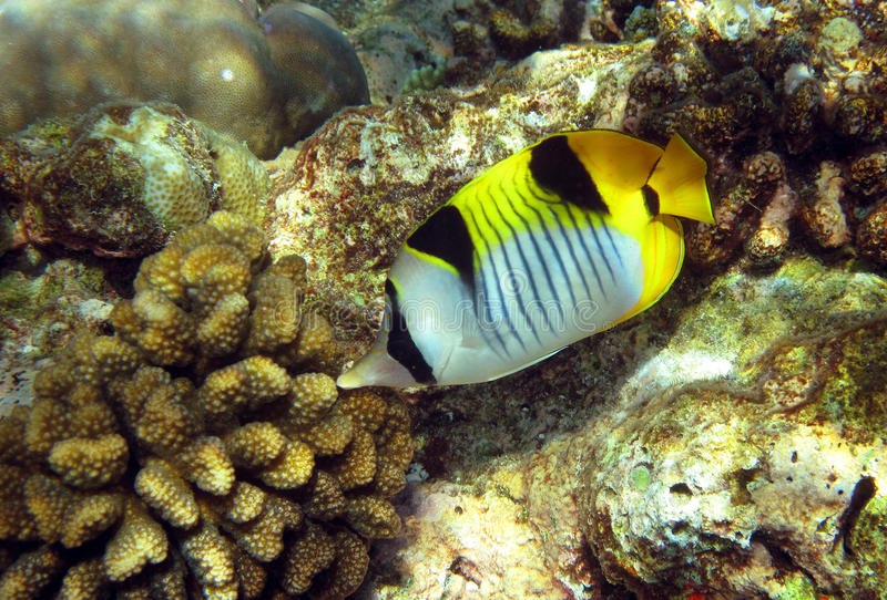 Onderwater wereld royalty-vrije stock fotografie