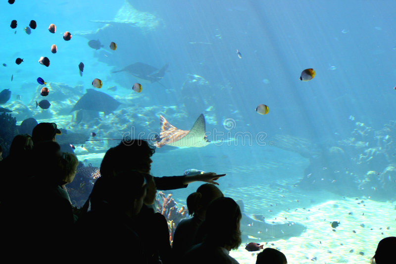 Onderwater Wonder royalty-vrije stock fotografie