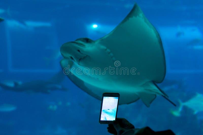 Onderwaterbeeld met mobiel royalty-vrije stock fotografie
