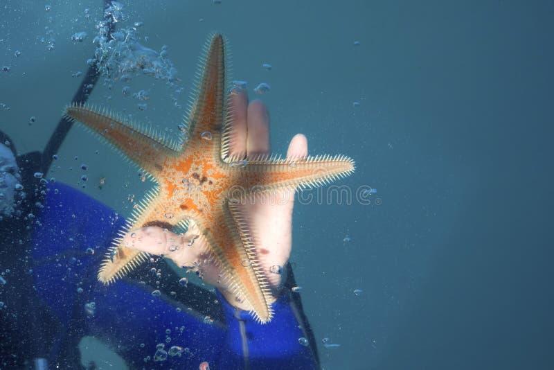 Onderwaterbeeld van een grote rode zeester in een hand van een duiker stock foto's