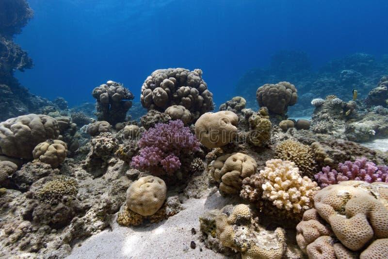 Onderwatercoral reef scene stock foto's