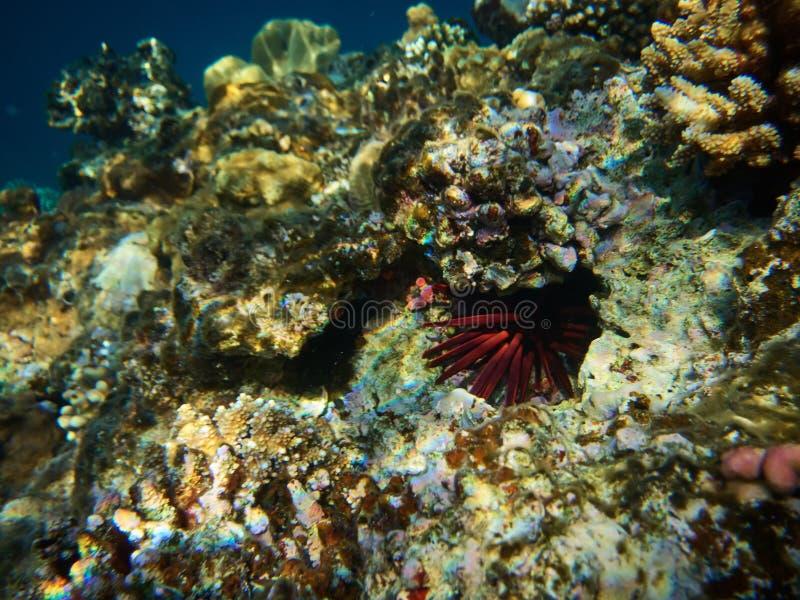 Onderwaterfoto van de rode jongen van het leipotlood stock fotografie