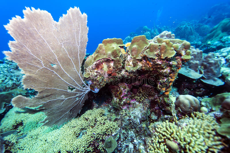 Onderwaterkoraalrif stock foto