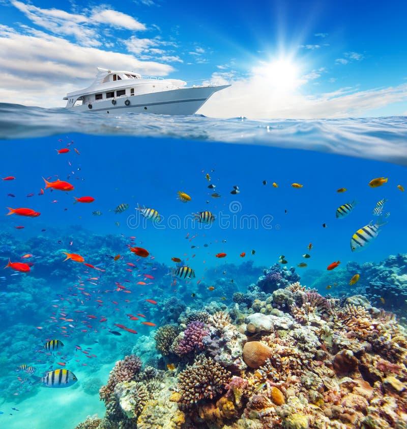 Onderwaterkoraalrif met horizon en water stock foto