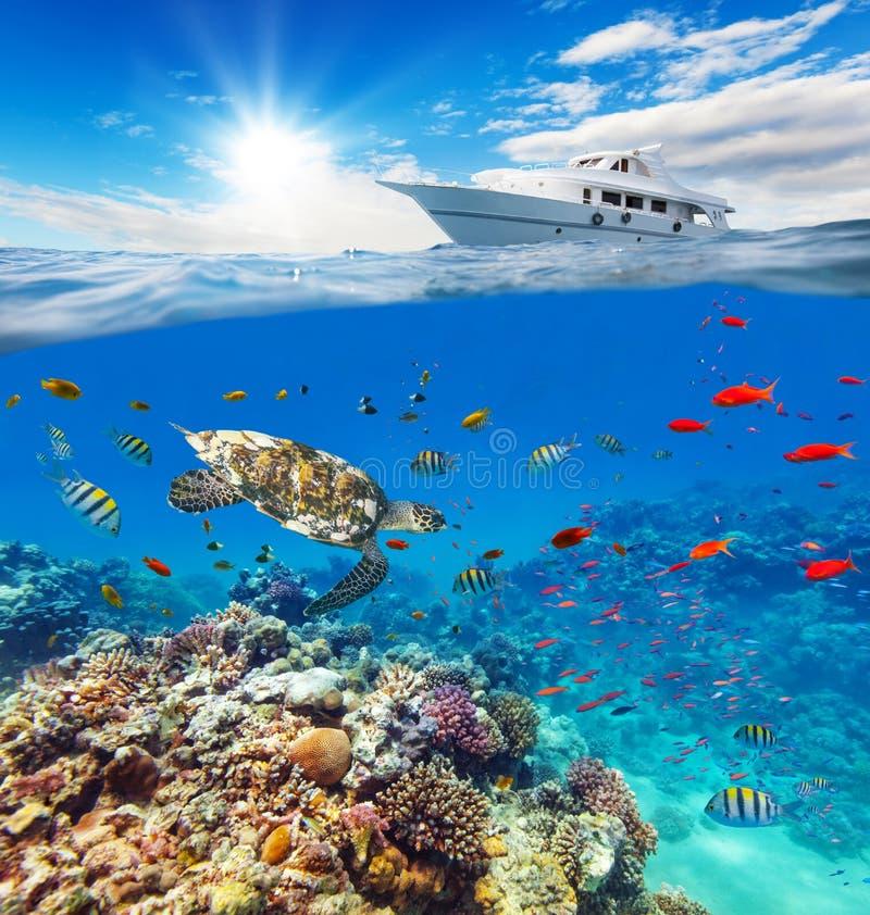 Onderwaterkoraalrif met horizon en waterspiegel royalty-vrije stock afbeelding