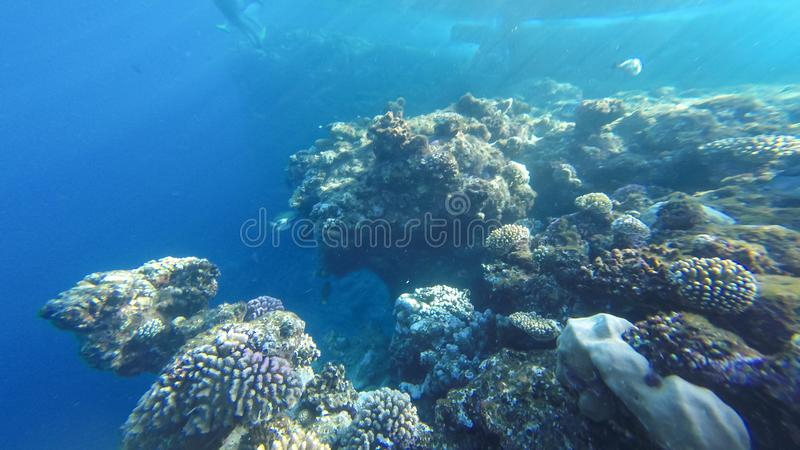 Onderwaterkoraalrif op het rode overzees royalty-vrije stock afbeelding