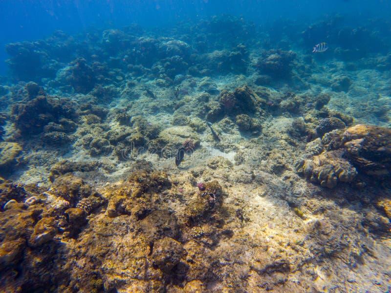 Onderwaterkoraalrif op het rode overzees stock afbeeldingen