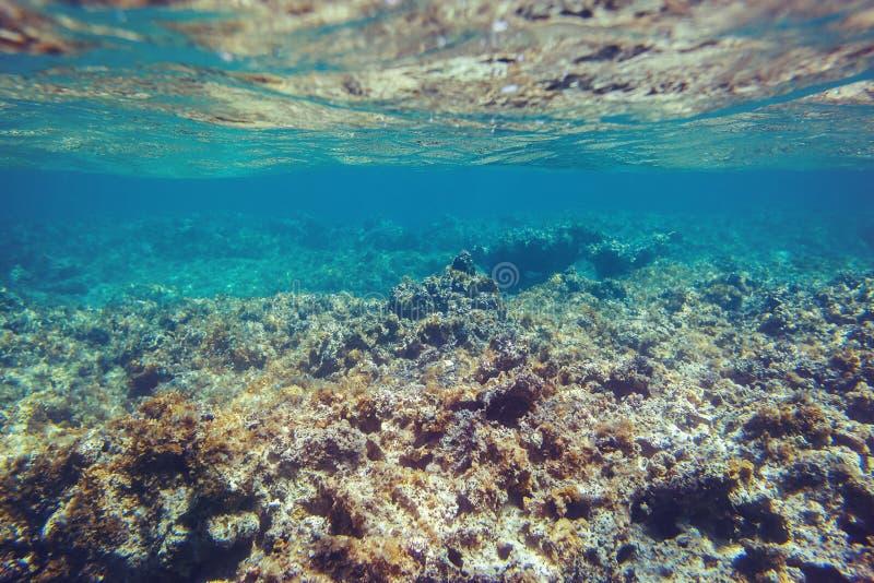 Onderwaterkoraalrifachtergrond in Caraïbische overzees stock afbeeldingen