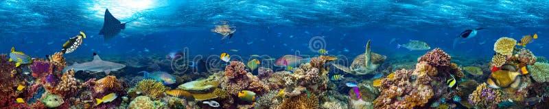 Onderwaterkoraalriflandschap royalty-vrije stock foto