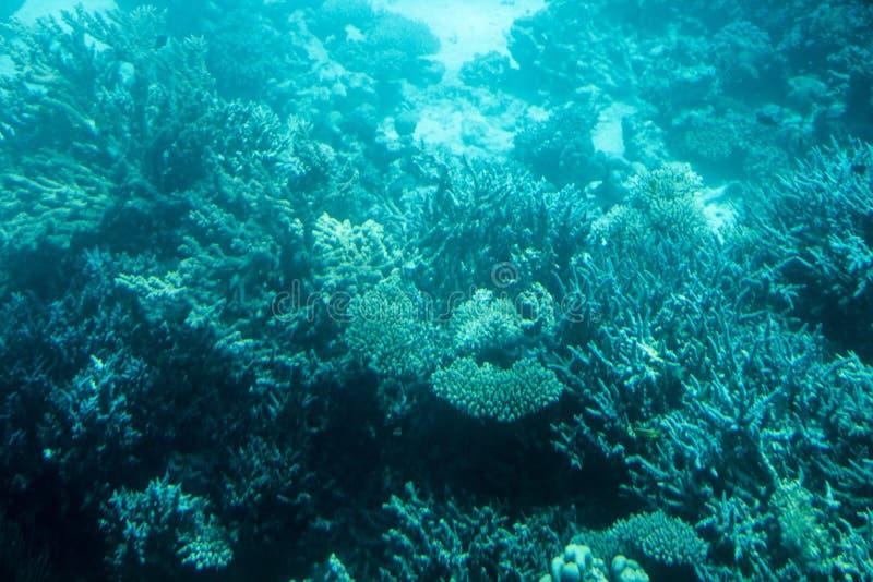 Onderwaterkoraalriflandschap in Egypte royalty-vrije stock foto