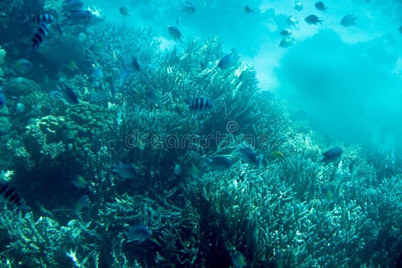 Onderwaterkoraalriflandschap in Egypte royalty-vrije stock fotografie