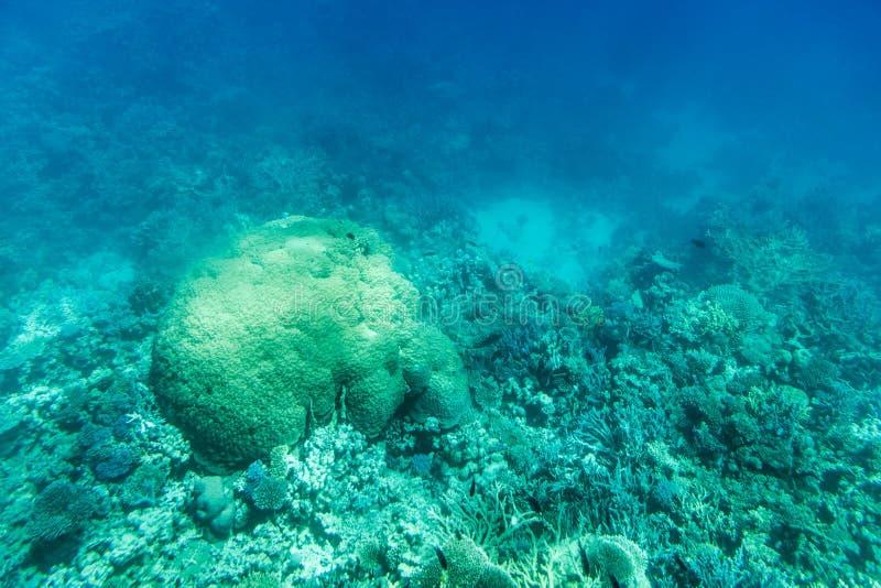 Onderwaterkoraalriflandschap in Egypte stock foto's