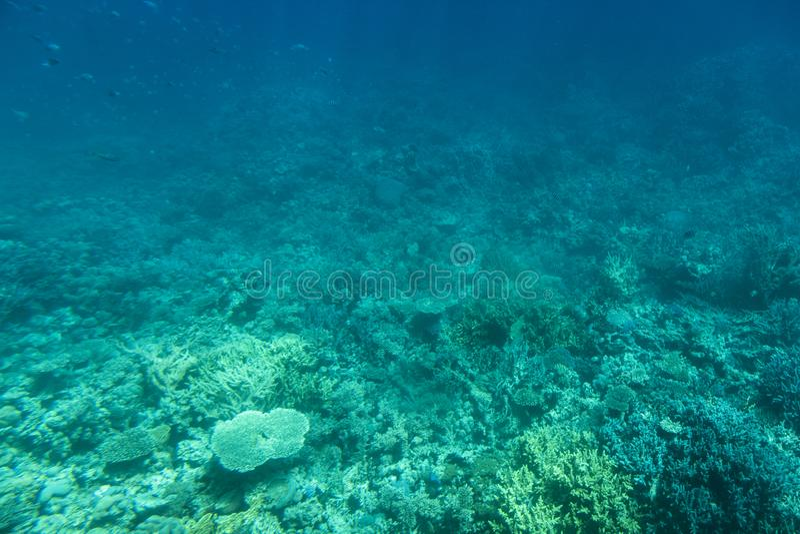 Onderwaterkoraalriflandschap in Egypte royalty-vrije stock foto's