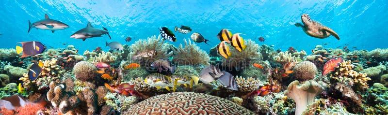 Onderwaterkoraalriflandschap royalty-vrije stock afbeelding