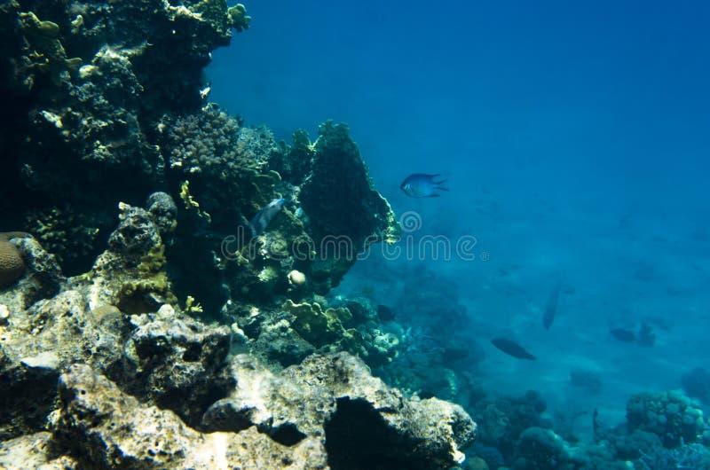 Onderwaterlandschap van het koraalrif royalty-vrije stock fotografie