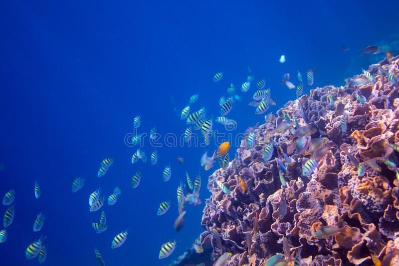 Onderwaterlandschap van tropische kust Koraalrifmuur in het water van de open zee royalty-vrije stock afbeelding
