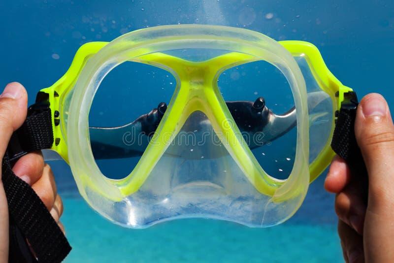 Onderwatermasker in handen van duiker en mantastraal royalty-vrije stock afbeelding