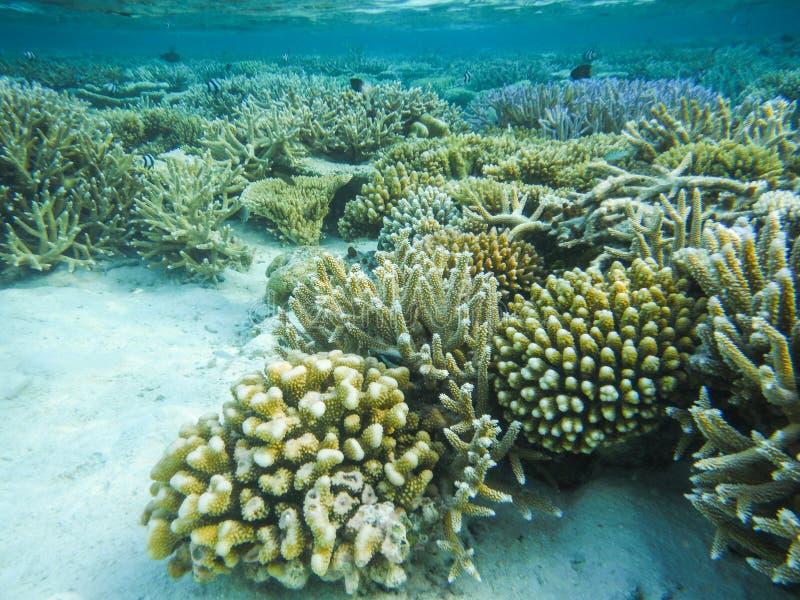Onderwatermening met prachtige en mooie koralen en tropische vissen in de Maldiven royalty-vrije stock afbeelding