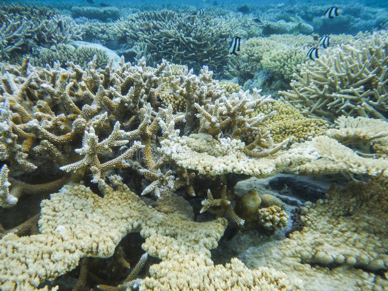 Onderwatermening met prachtige en mooie koralen en tropische vissen in de Maldiven royalty-vrije stock foto