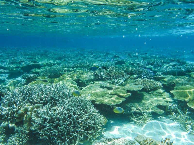 Onderwatermening met prachtige en mooie koralen en tropische vissen in de Maldiven royalty-vrije stock fotografie