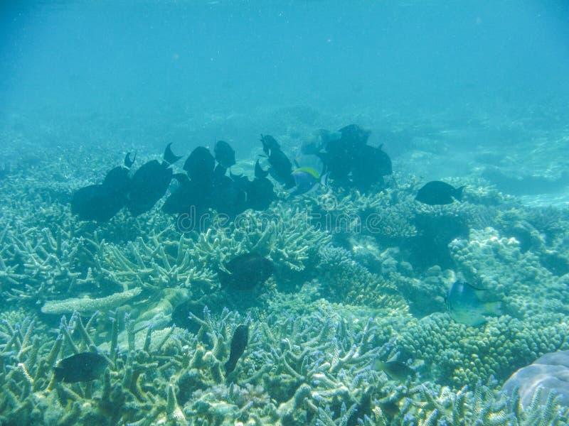 Onderwatermening met prachtige en mooie koralen en tropische vissen in de Maldiven stock afbeelding